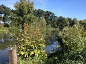 De Kromme Rijn bij Bunnik